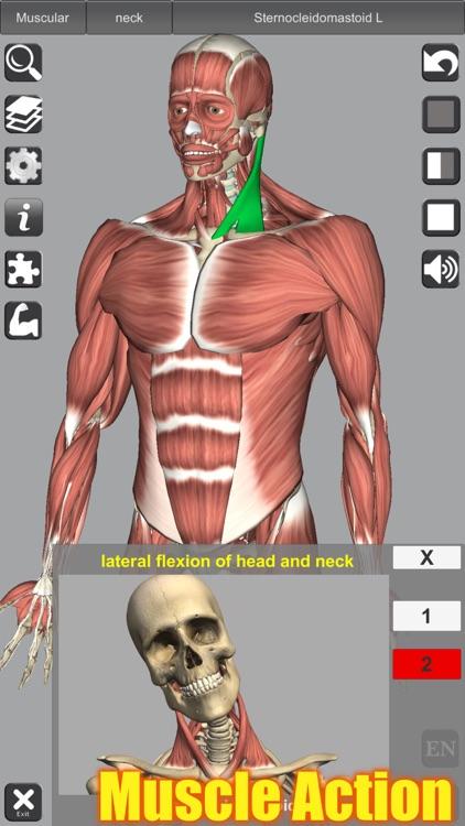 3D Anatomy screenshot-0