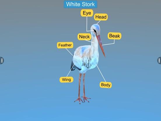 Diversity in Living: Aves screenshot 14