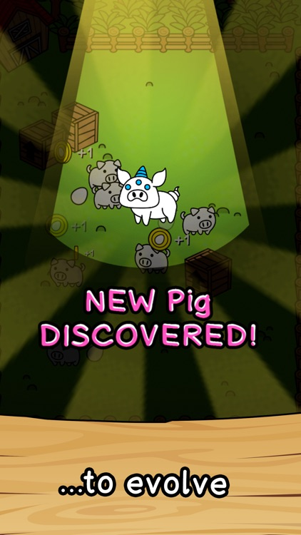 Pig Evolution