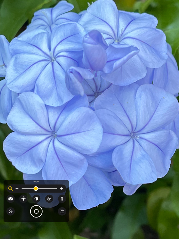https://is2-ssl.mzstatic.com/image/thumb/PurpleSource125/v4/62/79/8d/62798df3-13e6-179e-16c5-c9a8e51016f2/493ba755-fc2c-4465-8891-7a05565632bf_magnifier-j120-blue-flower.png/576x768bb.png
