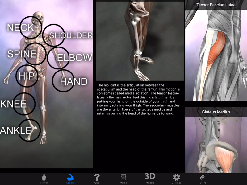 Muscle & Bone Anatomy 3D - Revenue & Download estimates - Apple App ...