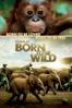 David Lickley - IMAX: Born to Be Wild  artwork