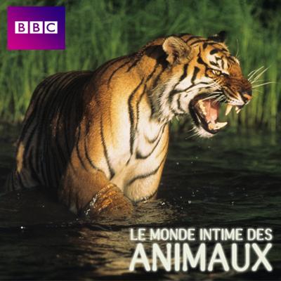 Le monde intime des animaux - Le monde intime des animaux