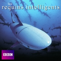 Télécharger Les requins intelligents Episode 1