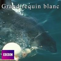 Télécharger Le grand requin blanc Episode 1