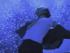 EUROPESE OMROEP | Black or White - Michael Jackson