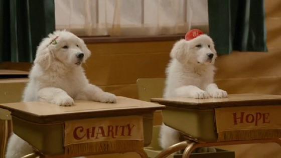 Babbo Natale Zampa.Zampa 2 I Cuccioli Di Natale Su Itunes