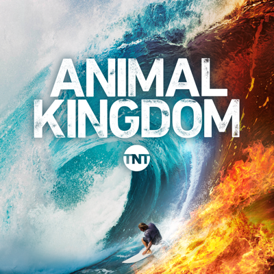 Animal Kingdom, Season 4 HD Download