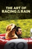 The Art of Racing In the Rain image