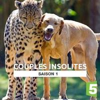 Télécharger Couples insolites Episode 1
